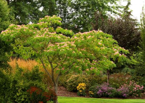 Planting Trees 10 To Avoid In Your