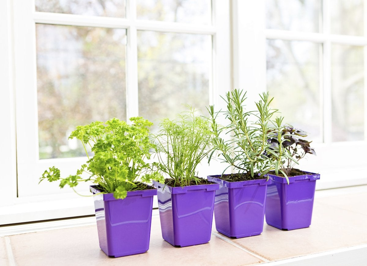 Windowsill_herb_garden