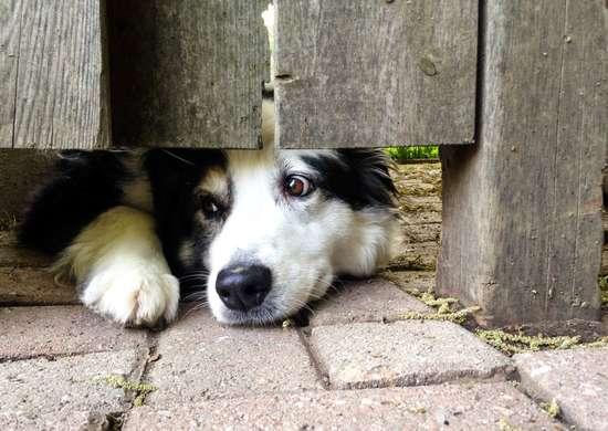 Neighborhood Dogs When Selling House
