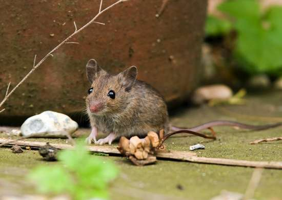 Mice-in-gutters
