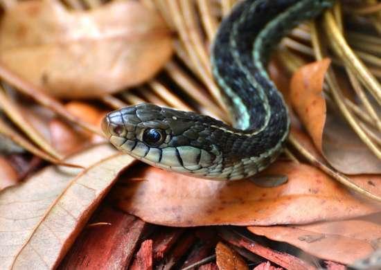 Snakes-in-gutters-2
