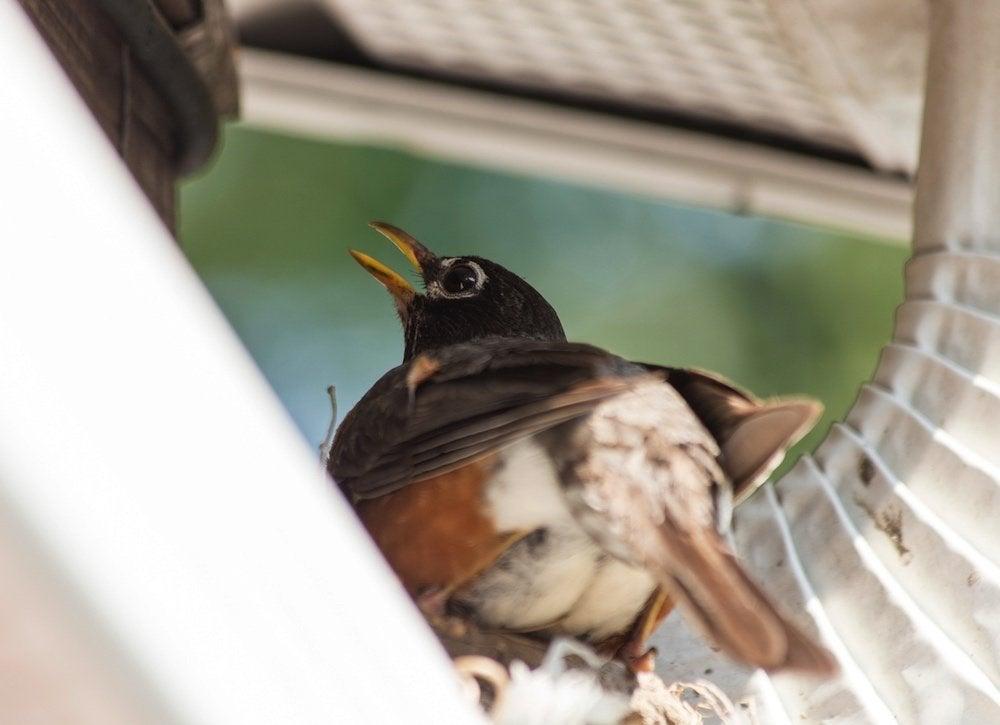 Birds gutters
