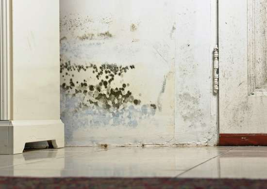 Mold drywall