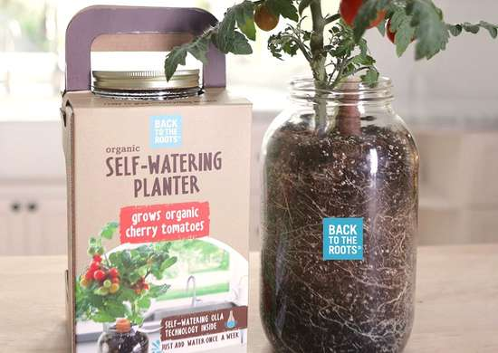 Back to the roots self watering tomato planter