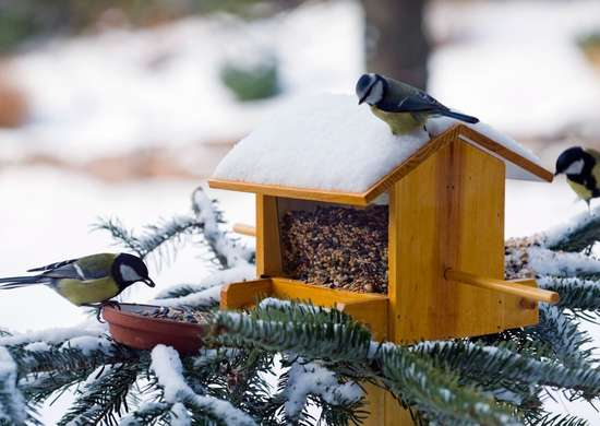 DIY Bird House for Winter