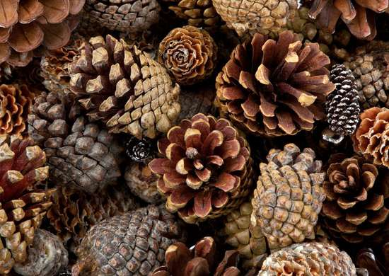 DIY Pinecone Mulch