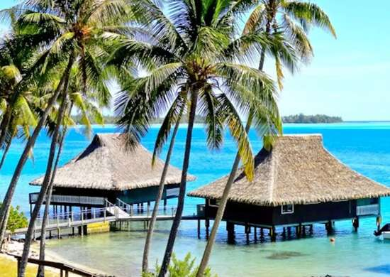 Black Pearl in Bora Bora, Leeward Islands, French Polynesia