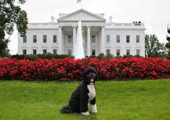 White house lawn bo