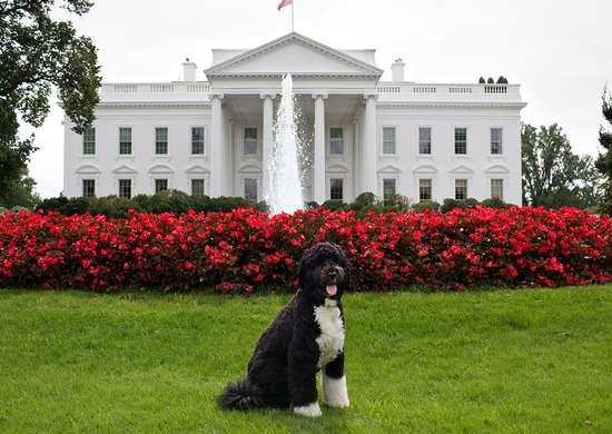 White house lawn bo