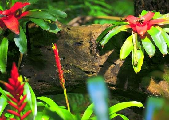 Wild Bromeliad
