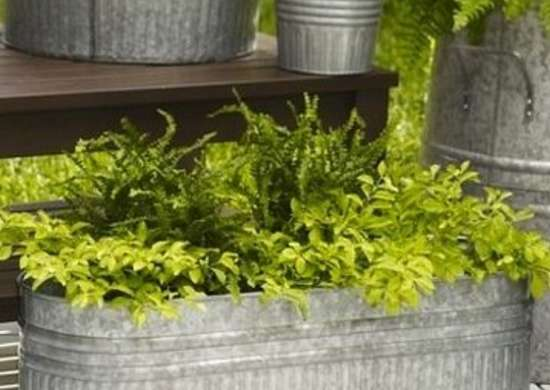 Curbappealplanter