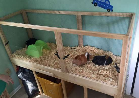 DIY Critter Cage