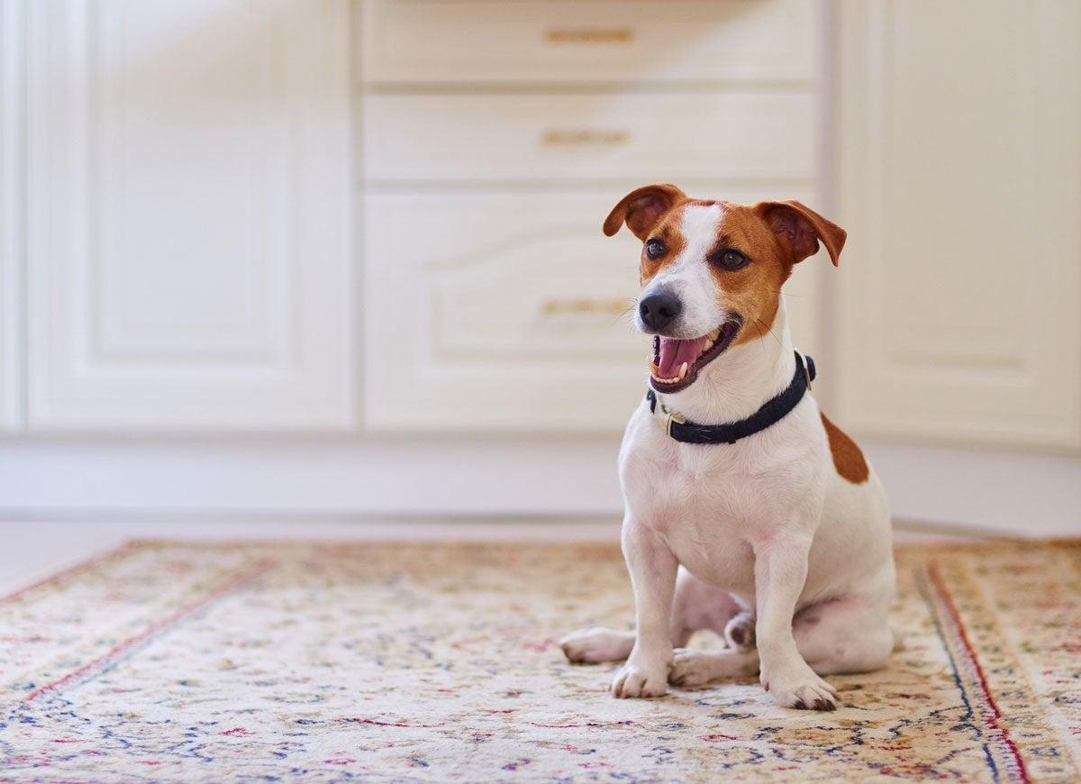 Dog-carpet