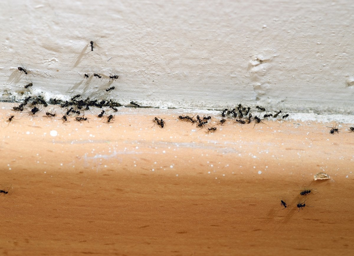 Uses for chalk ant repellent