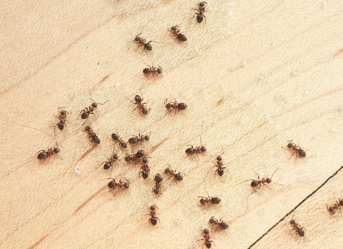 10 Bugs That Are Living In Your House And How To Get Them Out Bob Rh