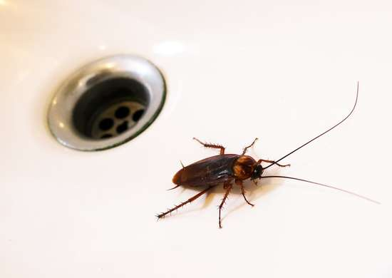 10 Bugs That Are Living In Your House And How To Get Them Out Bob Vila