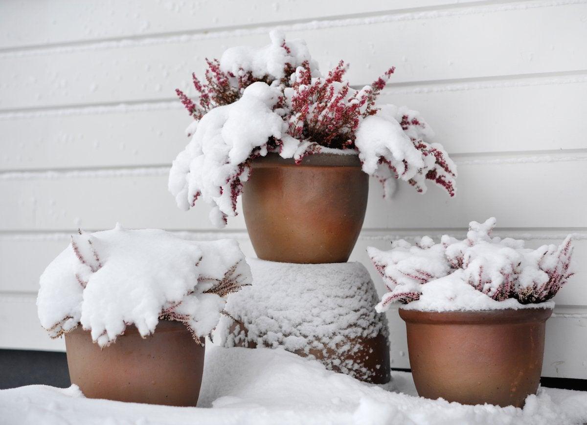 Plants-winter