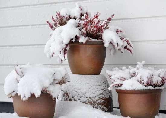 Plants winter