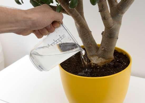 Water plants