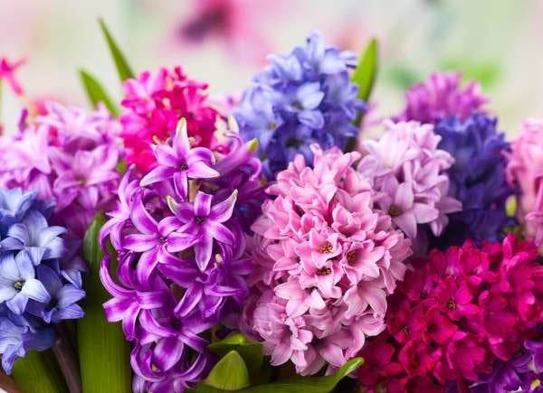 Hyacinth Allergy