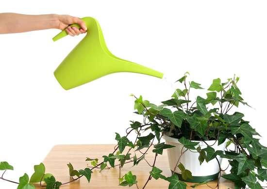 How Often To Water Houseplants