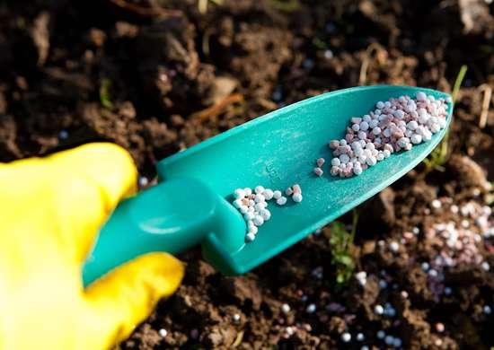 When To Apply Fertilizer