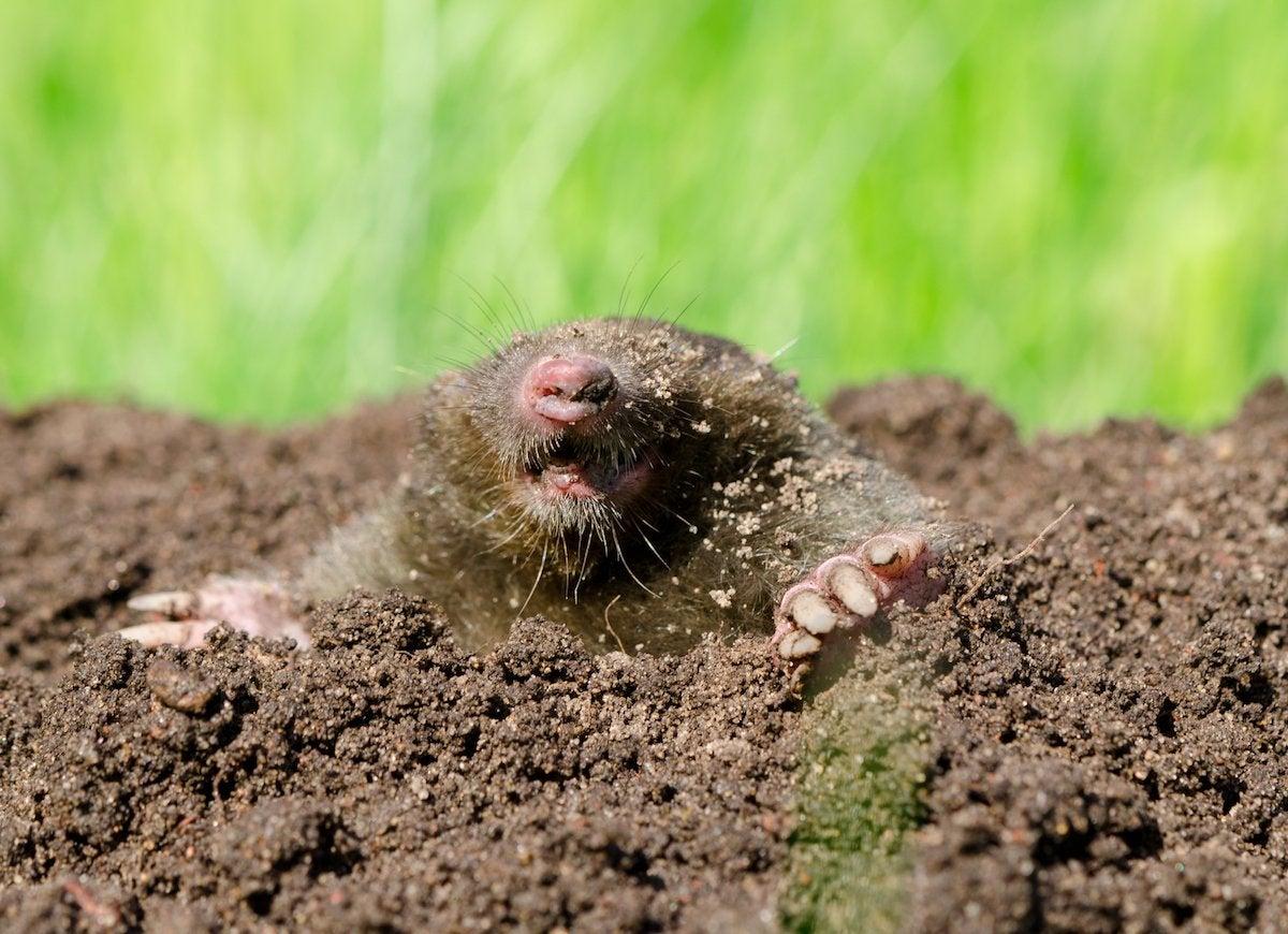 Lawn Care Tips - 7 Useful Remedies - Bob Vila