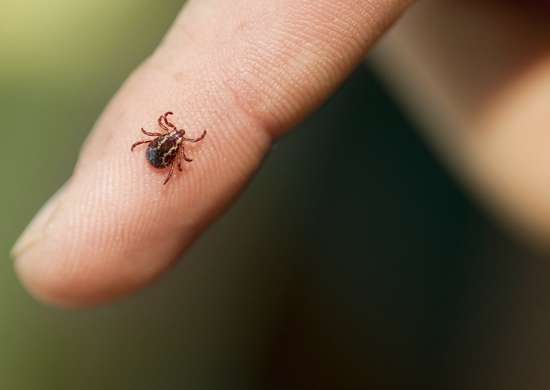 Bug related illness
