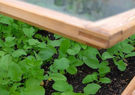 Buying cold frame kit