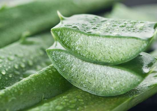 Aloe Vera for Bug Bites