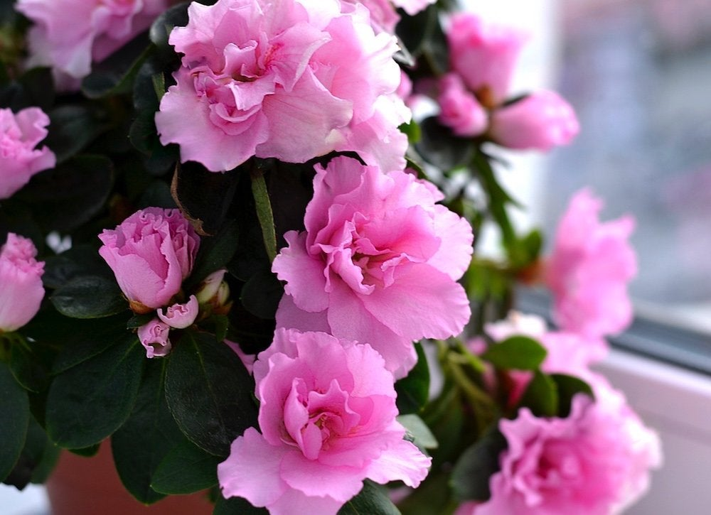 10 Houseplants That Are Surprisingly Hard To Keep Alive