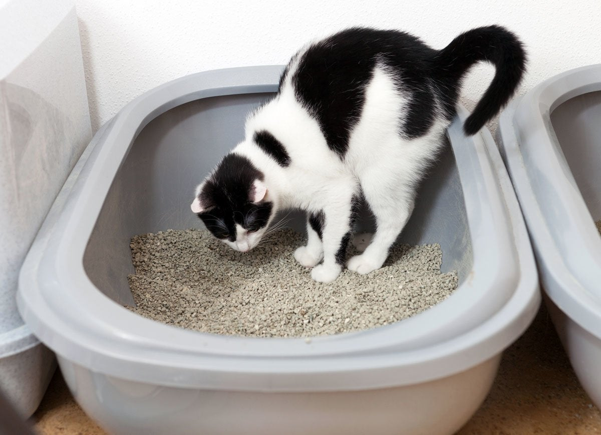 Can you flush kitty litter 10 things to not flush down the toilet bob vila - Things never flush ...
