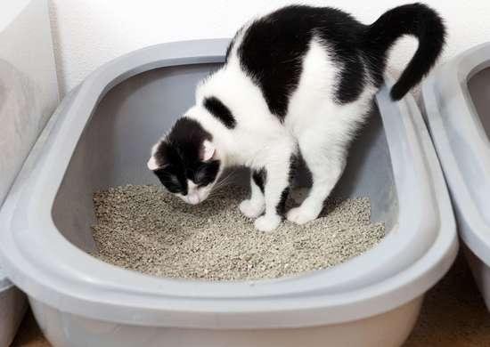 Can You Flush Kitty Litter?
