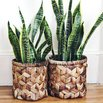 Wicker Backet Vases