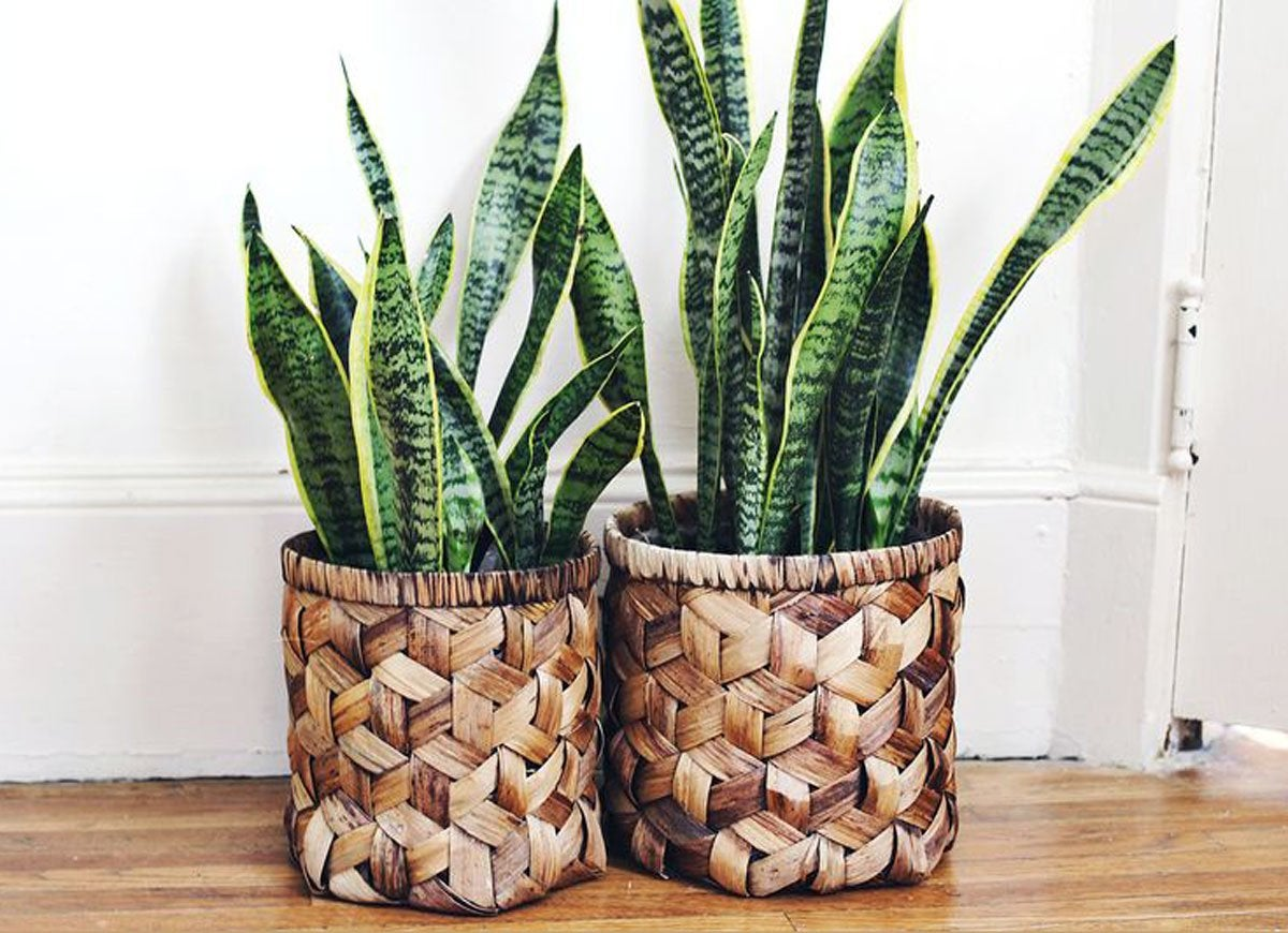 Wicker basket vases
