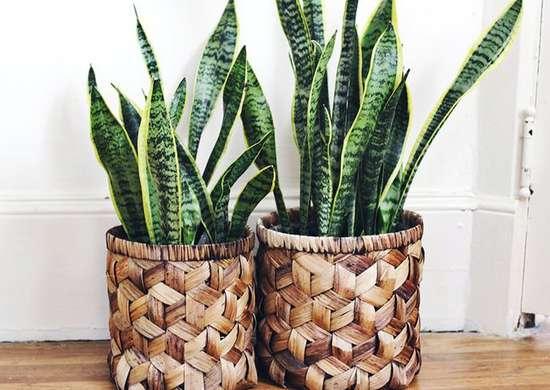 Wicker Backet Vases