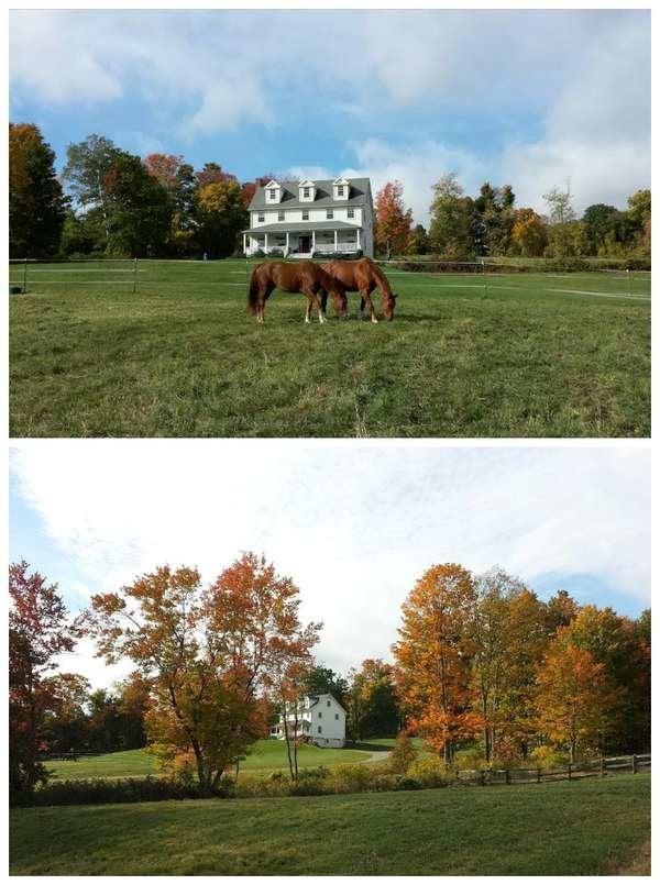 Farmhouse with Horses