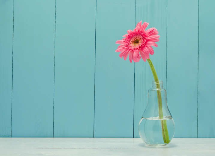 How To Care For Gerbera Daisies Indoors