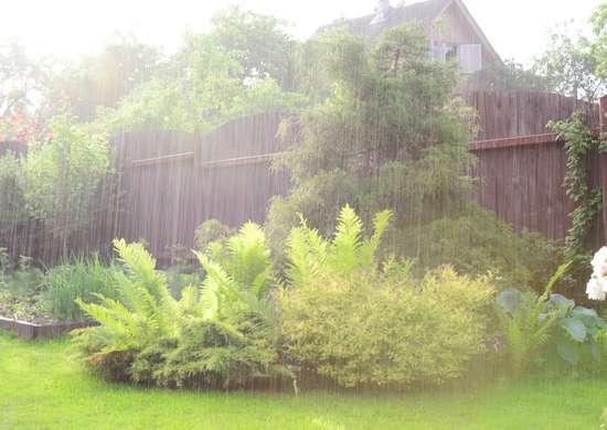 Rainfall In Garden
