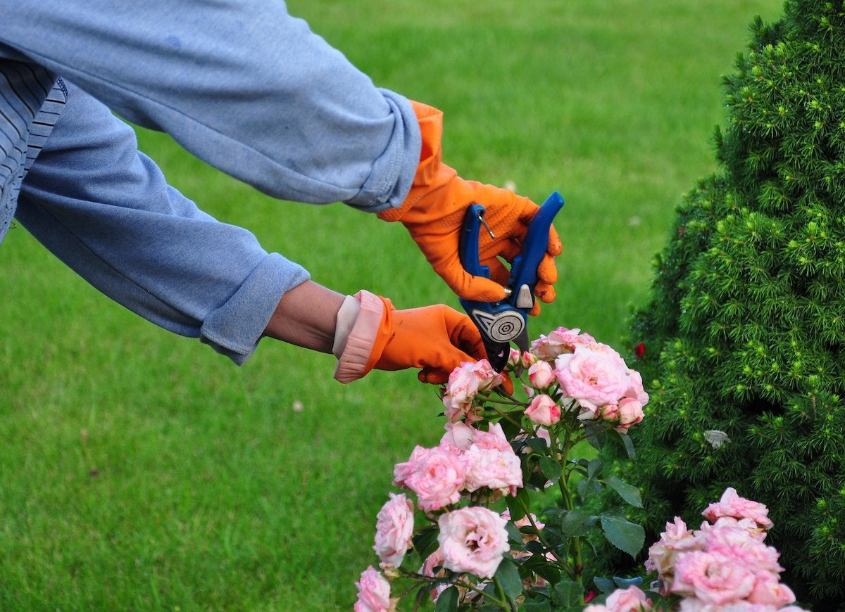 Gardening upkeep