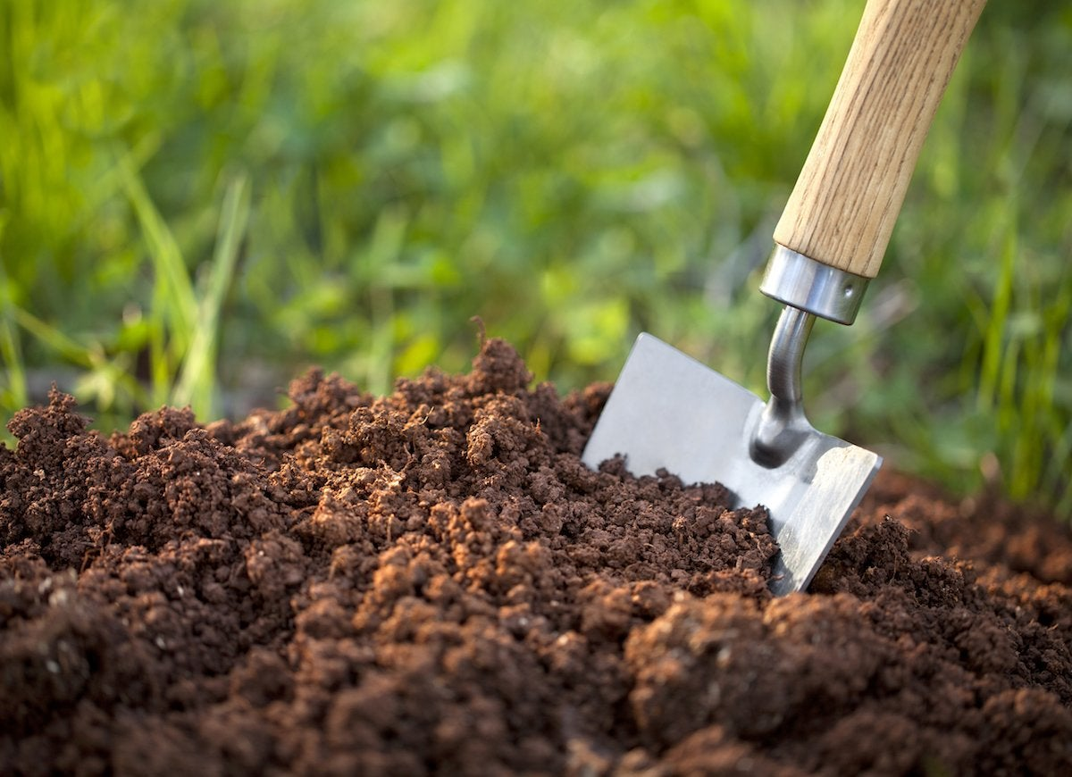 Different types of soil for plant growth 8 tips for for Things in soil