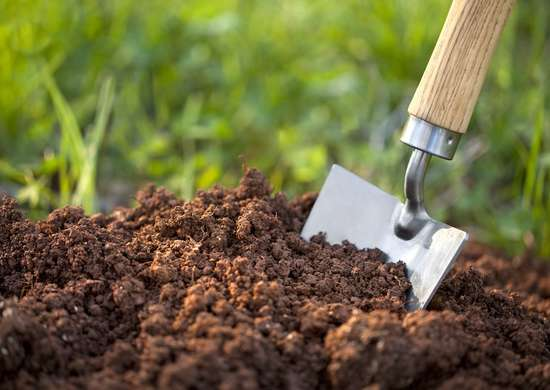 Different Types Of Soil For Plant Growth