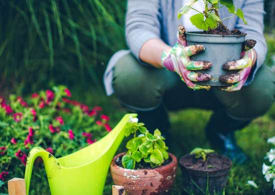 How to Garden for Free