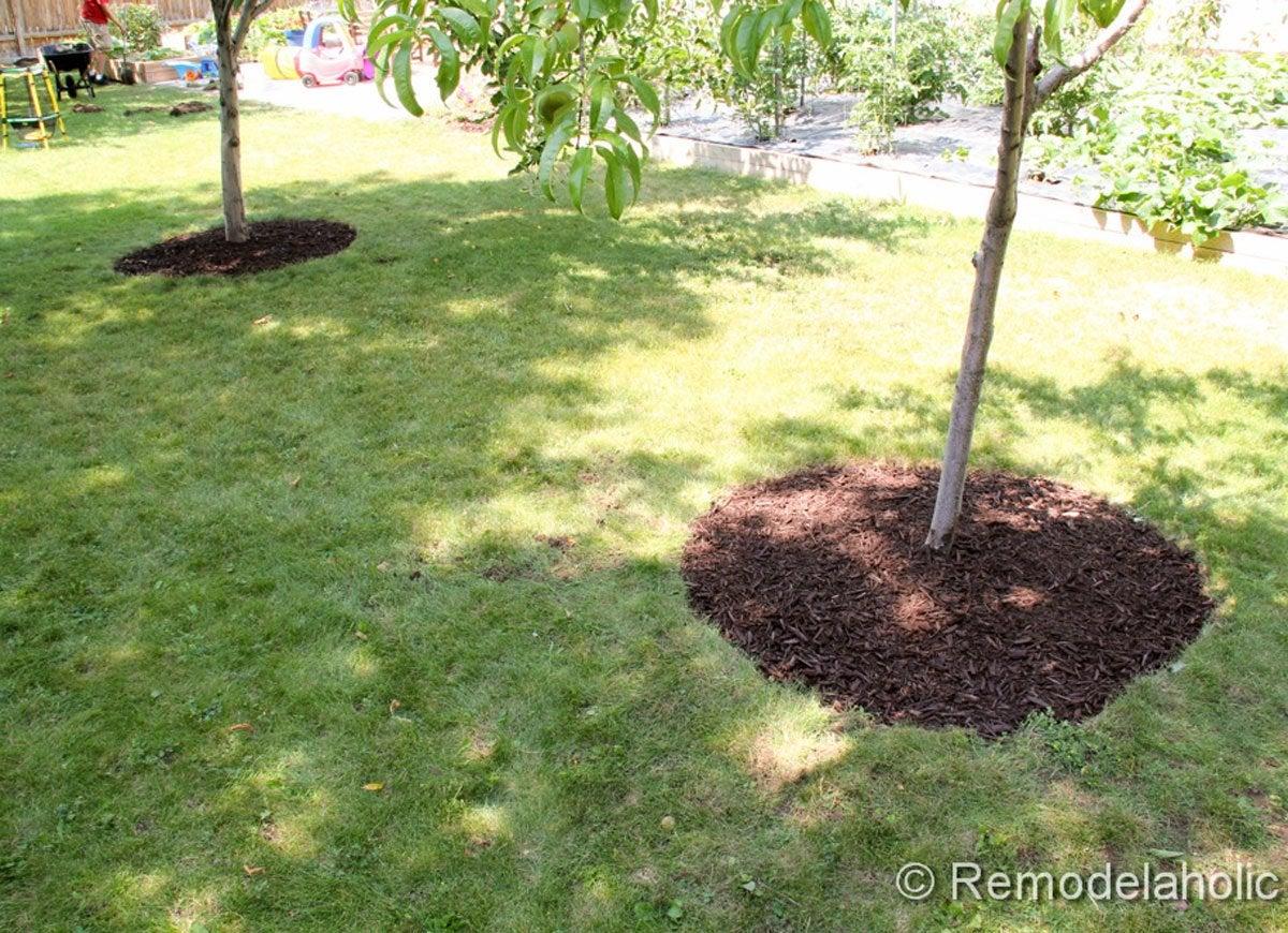 Mulch around trees