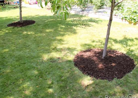 Cheap Mulch Around Trees