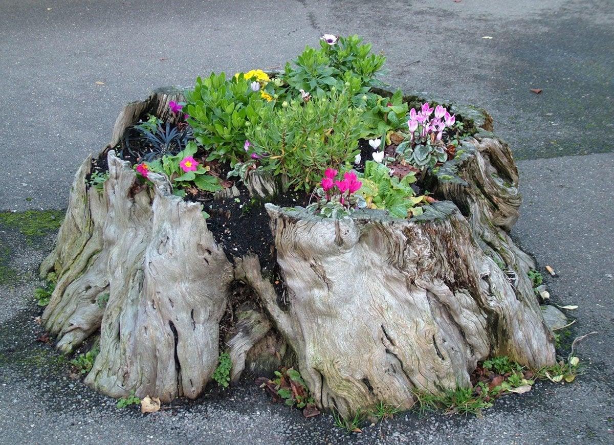 Tree stump planter