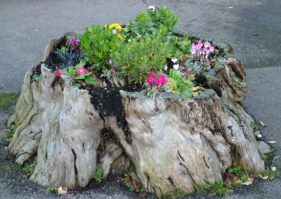 Cheap DIY Tree Stump Planter