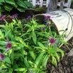 DIY Spilled Flower Pot