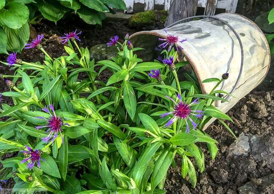 Spilled flower pot