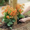 DIY Mailbox Landscaping